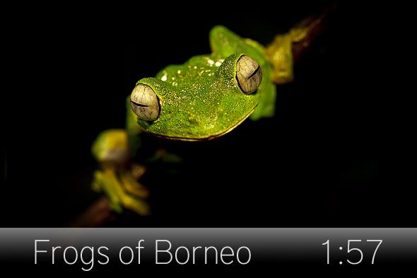 01_frogs_borneo