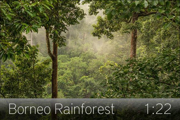 02_borneo_rainforest