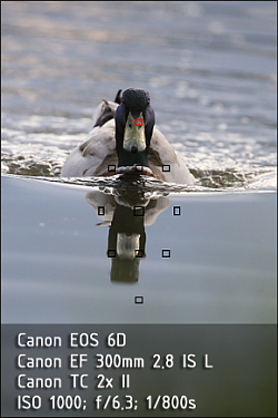 Canon EOS 6D a Canon EF 300mm 2.8 IS