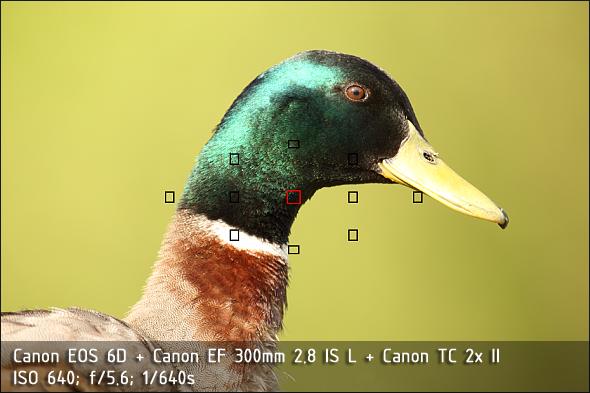Canon EOS 6D a Canon EF 300mm 2.8