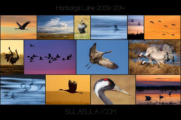 hornborga_590