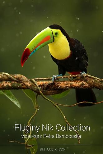 nik_big