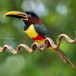 Víkendový kurz fotografie zvířat od A do Z