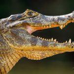 Přednáška Pantanal - ráj zvířat