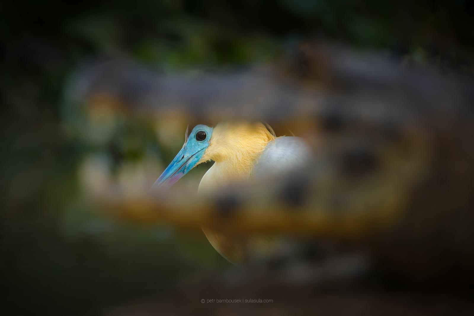 pantanal_07