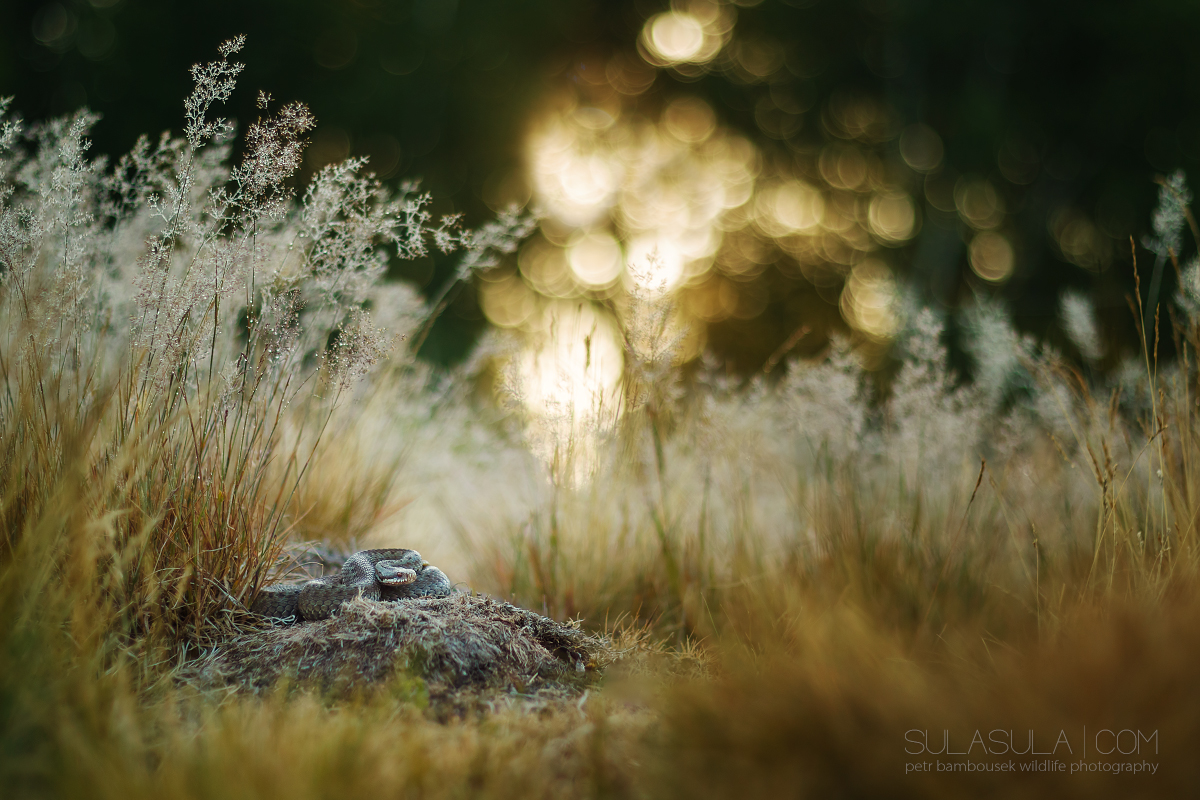Petr Bambousek | Wildlife Photography | Canon EF 7D Mark II for