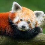 Kurz fotografie zvířat v ZOO Zlín (Lešná)