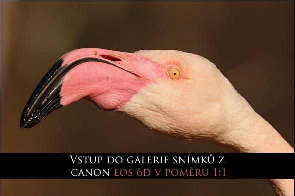 Vstup do galerie fotografií z Canon EOS 6D v poměru 1:1
